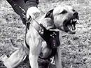 Die Hunde waren zuvor monatelang eingesperrt gewesen.