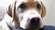 Es müssen auch die verschiedenen kantonalen und kommunalen Hundegesetze und -verordnungen befolgt werden.
