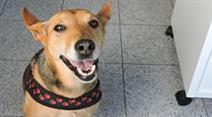 Der Hund sollte während des Zügelns bei Familienangehörigen, Freunden oder in einer Tierpension untergebracht werden.